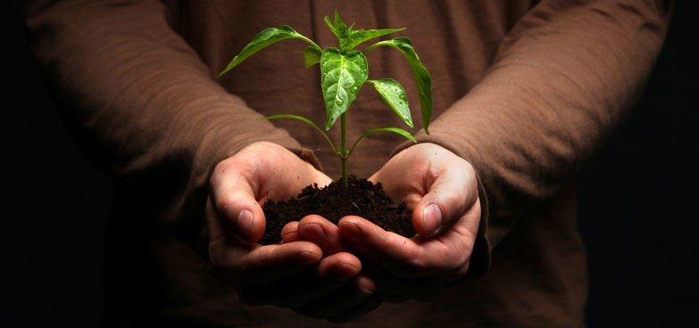 Why natural ingredients? | BERTRAND